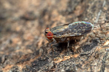 Macro Photography of Baby Housefly on Tree Bark