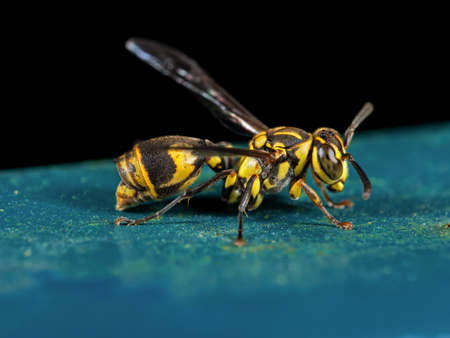 Macro Photography of Wasp on Blue Floor