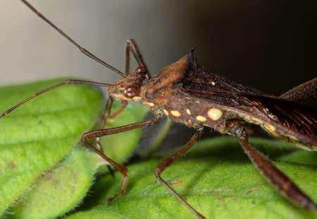 Macro Photography of Assassin Bug on Green Leaf Reklamní fotografie