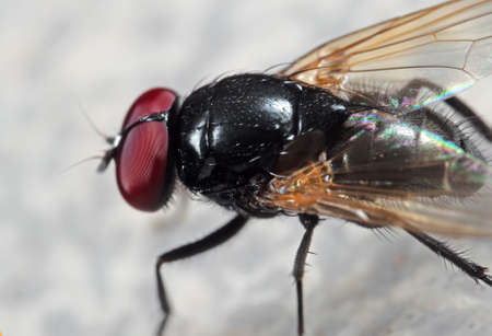 Macro Photography of Noon Fly on The Floor