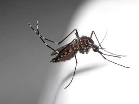 Macro Photography of Yellow Fever Mosquito on White Floor