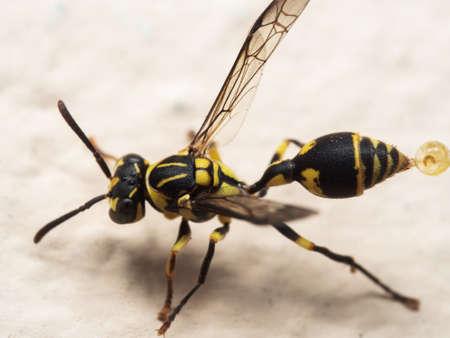 Macro Photography of Wasp on The Floor Banco de Imagens
