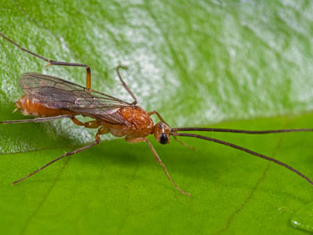 Macro Photography of Flying Ant on Green Leaf