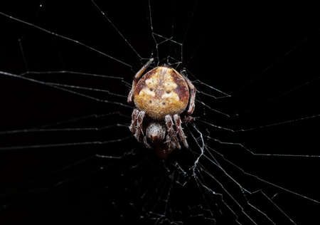 Macro Photography of Spider is on the Web Isolated on Black Background