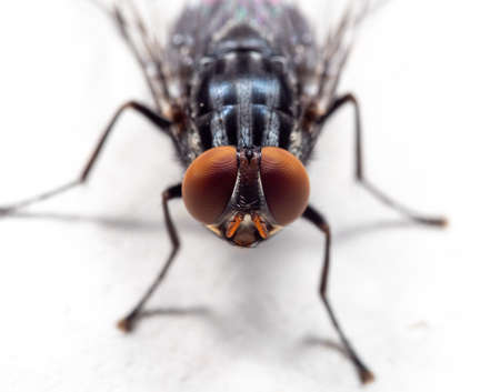 Macro Photography of Housefly on White Floor