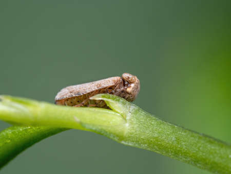 Macro Photography of Planthopper on Stalk of The Plant