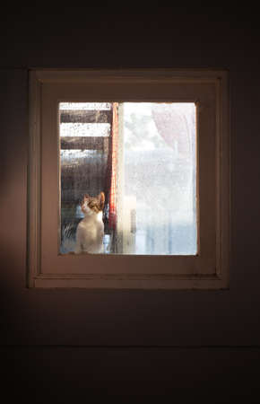 Close up Tabby Cat Looking Through The Window Фото со стока