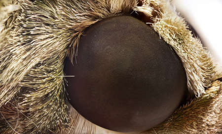 Macro Photography of Compound of Eye of Oleander Hawk-Moth or Army Green Moth