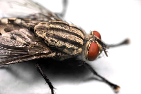 Macro Photography of Eye of Housefly Isolated on White Background Zdjęcie Seryjne