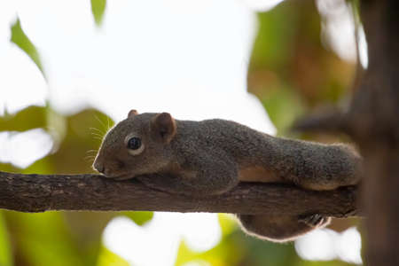 Close up Squirrel was Perched on a Branch Фото со стока