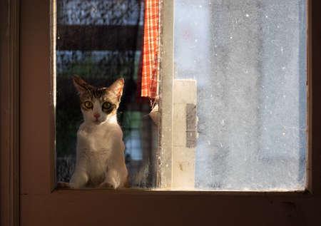 Close up Tabby Cat Looking Through The Window Фото со стока
