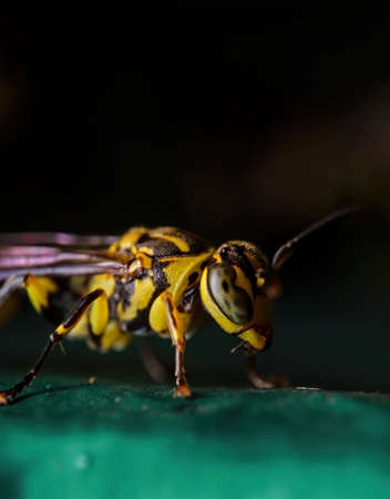 Macro Photography of Wasp on Green Floor Isolated on Background