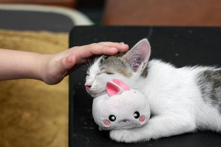 Close up Hand Stroking The Head of a Sleeping Kitten Фото со стока