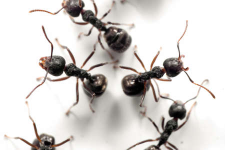Macro Photography of Group of Black Ants were Sitting on The White Wall