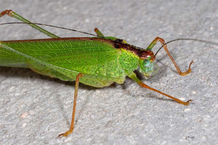 Macro Photography of Green Grasshopper on The Floor