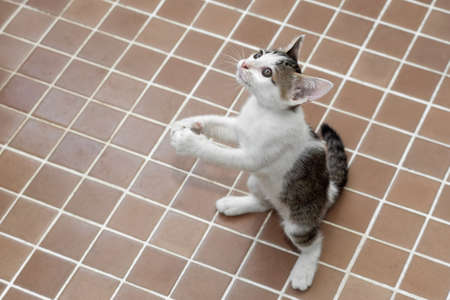 Close up Cute Tabby Kitten was Standing on Two Legs