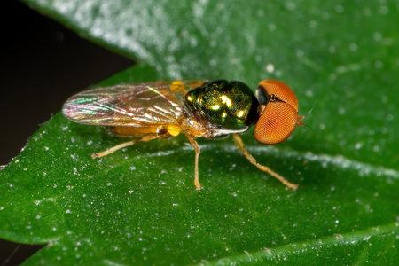 Macro Photography of Beautiful Fly on Green Leaf Фото со стока