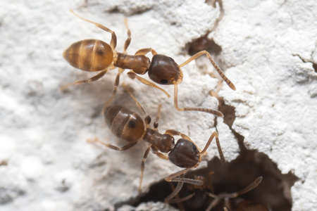 Macro Photography of Two Tiny Ants on White Wall