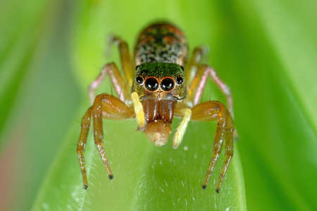 Macro Photography of Colorful Jumping Spider on Green Leaf