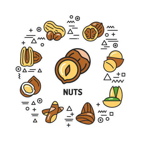 Nuts web banner. Infographics with linear icons on white background. Creative idea concept. Isolated outline color illustration. Illustration