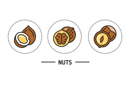 Nuts color line icons concept. Isolated vector element. Outline pictograms for web page, mobile app, promo