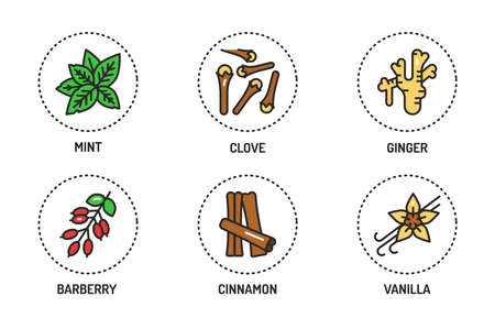 Spices and herbs color line icons set. Vector illustration.