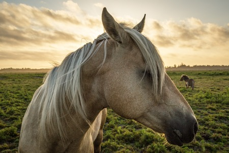 head profile: Profile of a horse, close-up, with a mini horse in the background. Stock Photo