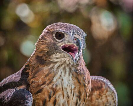 raptor: Portrait of a Raptor, Color Image, Day