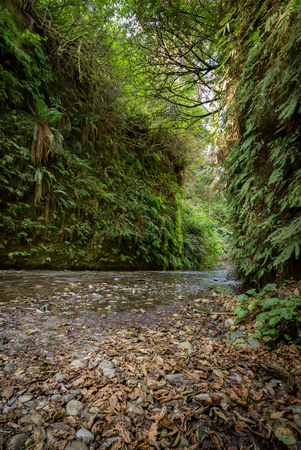 Fern Canyon in Humboldt County, California Stock Photo