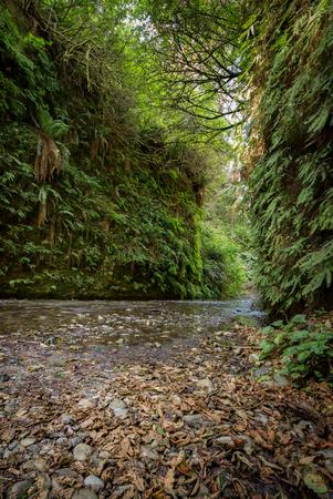 Fern Canyon in Humboldt County, California Archivio Fotografico