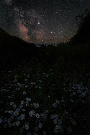 Daisies and the Milky Way in Trinidad, California Фото со стока