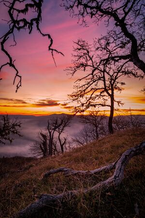 Lone Tree Watching Over the Valley at Sunset Foto de archivo