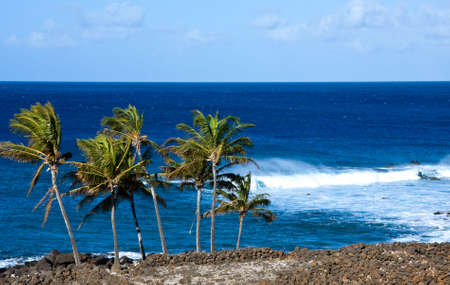 windswept: Group of windswept palm trees and rough sea Stock Photo