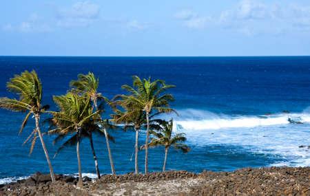 wzburzone morze: Grupa windswept palmy i morza surowca