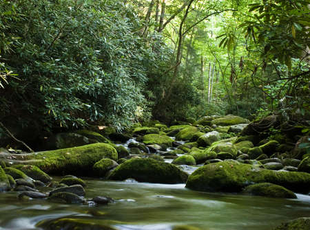 Forest river flowing gently over moss covered rocks Stock Photo - 2745852