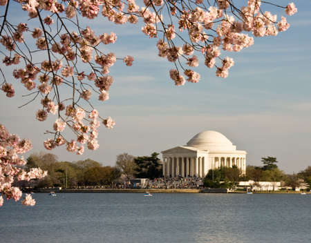 Jefferson Monument framed by cherry blossoms in April photo