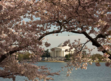 Jefferson Monument framed by cherry blossoms in Washington DC