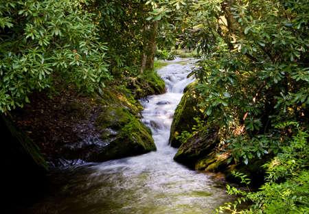 Rushing river through narrow gap in wooden area Stock Photo - 2923099