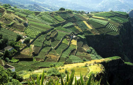 Cultivated terraced fields on the cliff top on the island of Madeira