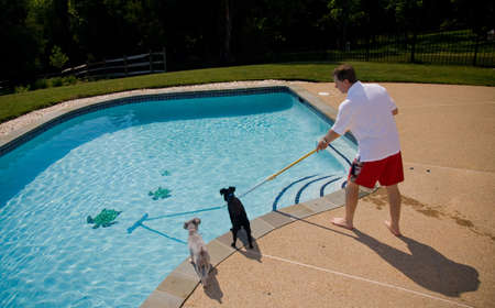 Middle aged man brushing swimming pool closely watched by two small dogs