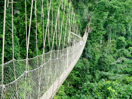 Rope walkway through the treetops in a rain forest in Ghana Banco de Imagens