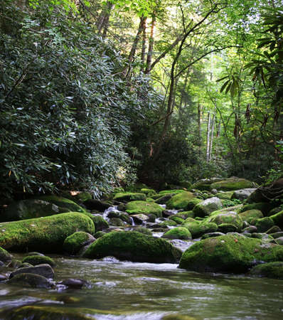 Gentle Rural river in Smoky Mountains over green mossy rocks Stock Photo - 3311420