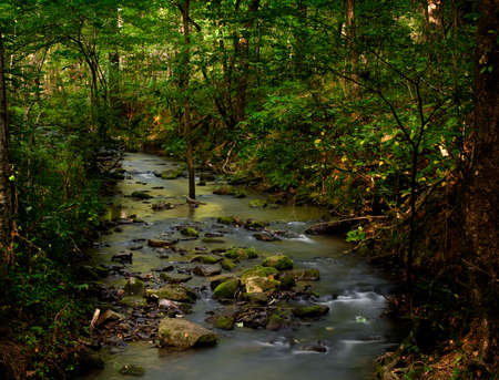 trickles: A small creek taken with long exposure trickles through a wooded forest Stock Photo