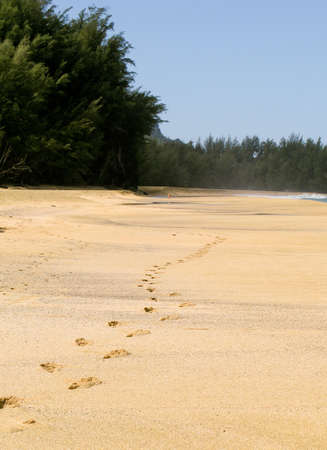 Footsteps on the pristine beach of Lumahai on the island of Kauai photo