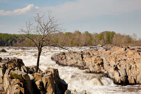 thrilling: Great Falls on the Potomac near Washington with a small tree struggling to survive on the rocks Stock Photo