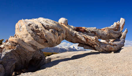 Old trunk frames a view of distant mountains in Yosemite valley Stock Photo - 4920322