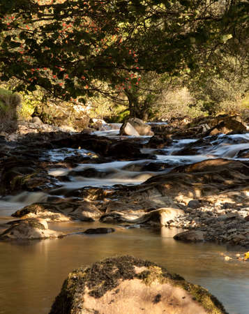 Brown colored water in small stream in valley Stock Photo - 5622576