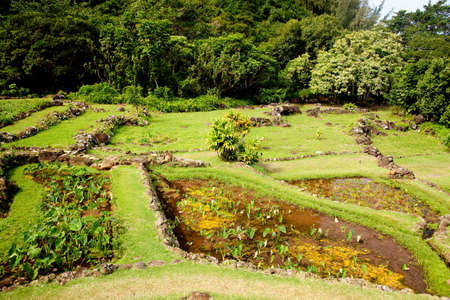 sloping: Example of terraced gardens in Kauai showing different plant types Stock Photo