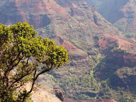 Waimea Canyon in Kauai, Hawaii with the early morning sun shining up the valley behind the rocks Stock Photo - 6488286