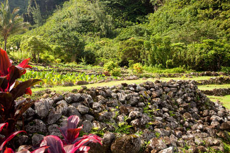 Example of terraced gardens in Kauai showing different plant types photo